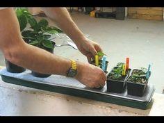 Bygg en självbevattningsbricka för fönsterbrädan! » Chili – Hobbyodling av chilipeppar!