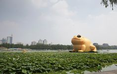 Giant inflatable golden toad on a huge lotus leaf appears on a lake in Yuyuantan Park in Beijing, July 19, 2014. Photo: Reuters