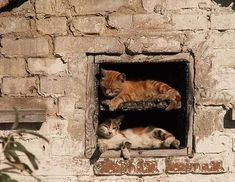 22 Adorable Kittens Sleeping & Resting In Funny Places And Positions | Cools And Fools