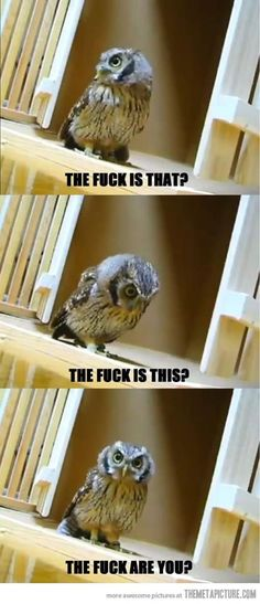 Some Owls really do look like they are pissed off at the world.