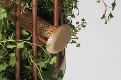 Orator bird feed and speaker by Katia Tolstykh