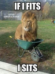 via The Grumpy Cat