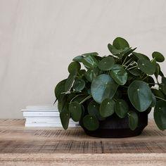 Earth Planter 19,5x10,5cm, Red/Brown £11. - RoyalDesign.co.uk