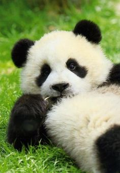Let's have a restful and peaceful Panda kind of day!