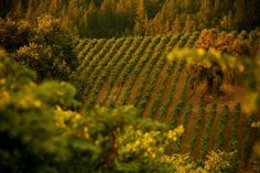 Dry Creek Valley is home to 60 + world-class wineries