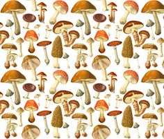 vintage botanical fungus fabric by redbriarstudio on Spoonflower - custom fabric
