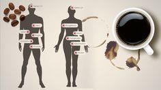 Infographik: Was bewirkt Kaffee im Körper? #energytogrow