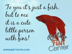To you it's just a fish, but to me it is a cute little person with fins