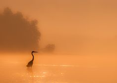 Photograph Misty Morning by David White on 500px