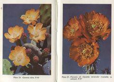 plant-scans
