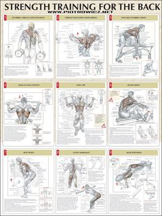 back workout strength training