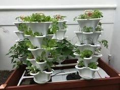 Ezgro Original Hydroponic Amazing Hydroponic Systems For Indoor Gardening Indoor Hydroponics, Hydroponic Farming, Hydroponic Growing, Hydroponic Systems, Hydroponic Gardening, Growing Plants, Indoor Gardening, Organic Gardening, Gardening Tips