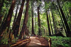 Muir Woods National Monument. San Francisco (California) by Ernest Glez. Roda on 500px