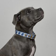 Purchase online cotton and brass dog collar lovingly handmade in Melbourne, Australia by Animals In Charge. Pet Supply Stores, Large Animals, Greatest Adventure, Vintage Denim, Animal Rescue, Beautiful Things, Pet Supplies, Your Dog, Collars