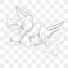 Forgetful Flower Line Drawing Hand Drawn Illustration, Forget The Flower Line Drawing, Hand Painted Forget Me Not, Flower Clipart PNG Transparent Clipart Image and PSD File for Free Download