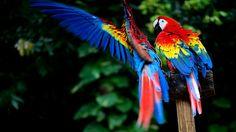 Portrait images amazon macaw walls scarlet