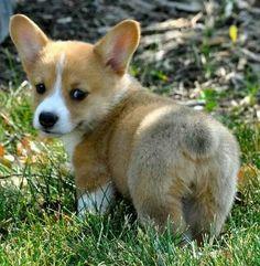 Fluffy butt