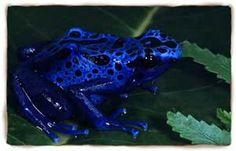 Frog (amphibian) - Bing Images