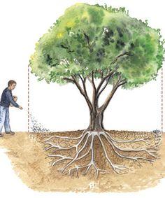The ABCs of fertilizing trees