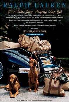 Vizslas - Ralph Lauren knows what's up Email Marketing Design, E-mail Marketing, Email Design, Affiliate Marketing, Best Dog Breeds, Best Dogs, Hungarian Vizsla, Email Campaign, E Commerce