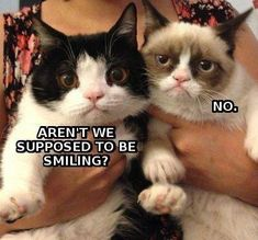 Cats are funny, grumpy cats are hilarious. The Internet is full of Grumpy cats funny memes. Even we came across such funny pictures while surfing the web. Grumpy Cat Breed, Grumpy Cat Quotes, Funny Grumpy Cat Memes, Cat Jokes, Funny Animal Jokes, Cute Funny Animals, Funny Animal Pictures, Funny Cute, Animal Memes