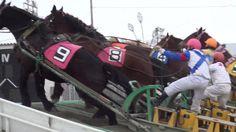 ばんえい競馬(2014冬)帯広競馬場 Banei-keiba /Horse racing attracts iron sled. (Only i...