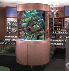 Aquarium company that designs service supplies aquariums and builds marine and fish aquariums in Los Angeles and Orange County