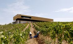 atelier rua wraps a winery pavilion in golden colored metal skin in portugal