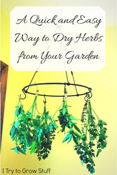 A quick and easy way to dry herbs from your garden | hanging | dehydrator