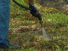 LAWN DISEASES - Below is a list of common lawn diseases and other issues you may encounter.