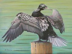 Nicky Shelton - Dillon Cormorant - Bird - Painting