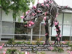 Beware those plastic yard flamingos! They may look tame but they can pick a T-Rex dinosaur covered in pink flamingos clean in minutes! Tumblr Funny, Funny Memes, Funny Videos, Funniest Jokes, Funny Quotes, John Johnson, Pink Flamingos, Plastic Flamingos, Yard Flamingos