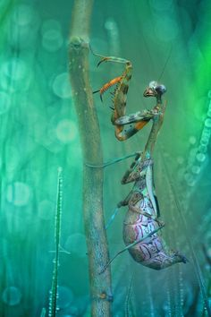 Beautiful macro pictures of insects by Wil Mijer...
