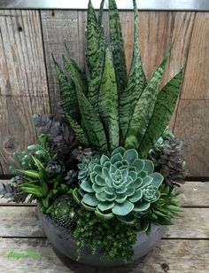 ideas for succulent garden diy outdoor cactus Succulent Gardening, Planting Succulents, Garden Pots, Container Gardening, Planting Flowers, Organic Gardening, Succulent Plants, Veg Garden, Garden Bed