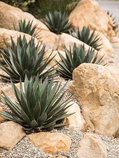 Succulent Landscaping, Hillside Landscaping, Succulent Gardening, Tropical Landscaping, Cacti And Succulents, Front Yard Landscaping, Spanish Landscaping, Agaves, California Garden