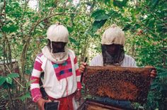 Fairtrade Info / Home / Products / Honey