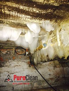mushrooms grow along with mold in this very damp basement mold remediation pinterest. Black Bedroom Furniture Sets. Home Design Ideas