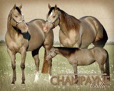 AQHA Champagne Mares - Shining C Grulla Horses. Percheron Horses, Haflinger Horse, Mare Horse, Andalusian Horse, Horse Tail, Arabian Horses, Thoroughbred, Quarter Horses, American Quarter Horse