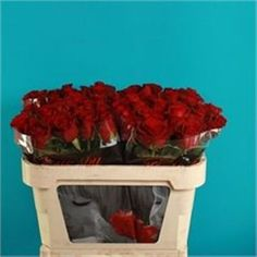 Being 40cm tall means that these roses will definately be small-headed. Burgundy Roses are deep red & usually available all year round. 40cm stem lengths this wholesale cut flower is wholesaled in 60 stem wraps.