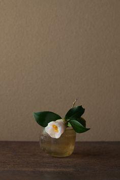 2012年4月2日(月)   憂い顔もまた椿の一面です。   花=呼子鳥椿(ヨブコドリツバキ)   器=ローマングラス碗(ローマ時代)