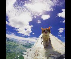 Kuli, le chat borgne passionné de surf !