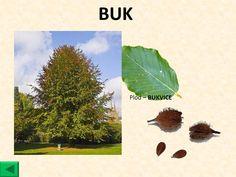 Elementary Science, Kindergarten, Autumn, Activities, Garden, Garten, Fall Season, Lawn And Garden, Kindergartens