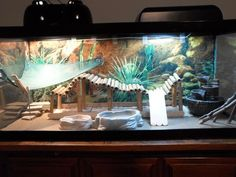 31 The tank decoration of an attractive bearded dragon habitat - meowlogy Bearded Dragon Tank Setup, Bearded Dragon Vivarium, Bearded Dragon Terrarium, Bearded Dragon Enclosure, Bearded Dragon Habitat, Bearded Dragon Diet, Bearded Dragon Cage Ideas, Lizard Cage, Reptile Room
