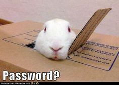 Image result for funny bunny