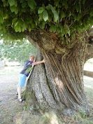 1000+ year old tree
