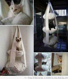 Floating beds for cats…