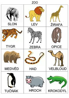 List of animals in zoo – A Selection of Pins about Animals Zoo Animals List, Animals And Pets, Zoo Animal Activities, Book Activities, Zoo Scavenger Hunts, Animals Name In English, Kansas City Zoo, Kids Zoo, Little Giraffe