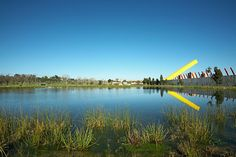 Constructed wetland    06_Rushwright_landscapearchitecture_Royal_Park