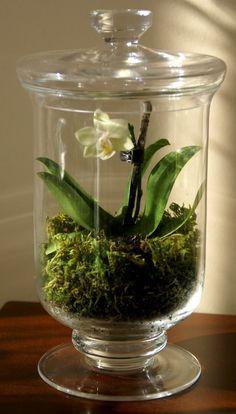 Terrarium ideas - orchid enclosed glass (from speckled-fawn-en. Orchid Terrarium, Succulent Terrarium, Succulents Garden, Plante Sous Cloche, Mini Orquideas, Inside Plants, Dish Garden, Deco Floral, Orchid Plants