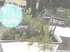 ::the cutest herb garden providing inspiration for my future garden!::